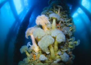 Dive, Scuba, Oban. Reef,