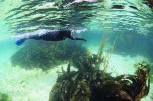 Snorkelling, Argyll, Oban,