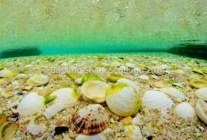 Hebrides, Diving, Visibility, Scuba, Scotland