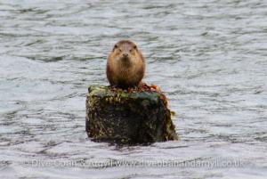 SS Meldon, Otter, Wreck, Meldon, Loch Buie, Mull, Argyll, Scotland, Shipwreck
