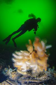 Sea Loch, Diving, Oban, Argyll, Scotland
