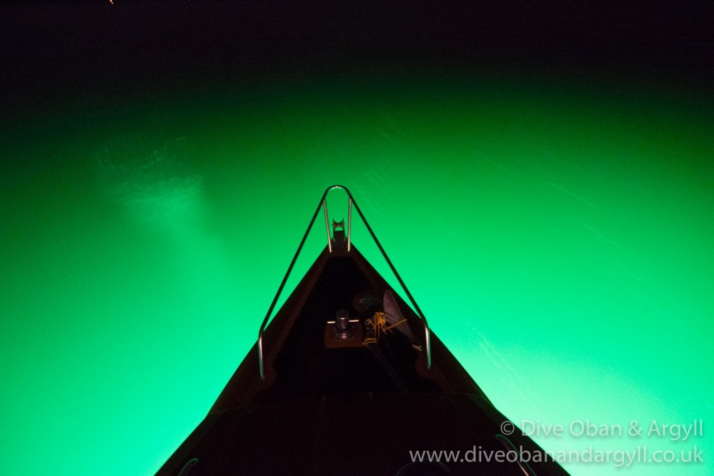 night diving from oban