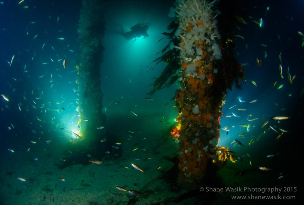 Floodlit pier dive