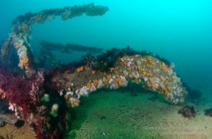 Tapti, Wreck, Coll, Scuba, Diving, Mull, Argyll, Scotland, Shipwreck, Soa